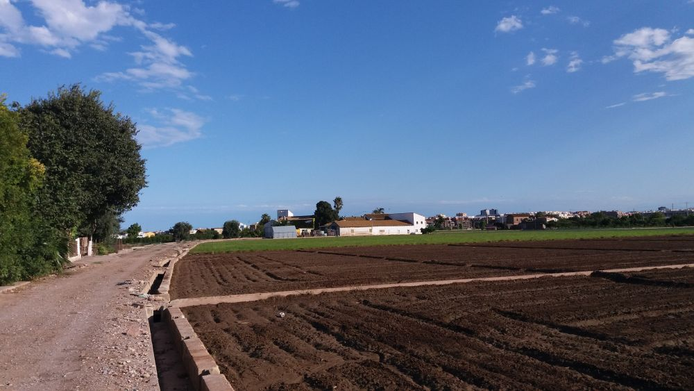 """Huerta de València"" designated as Globally Important Agricultural Heritage System"